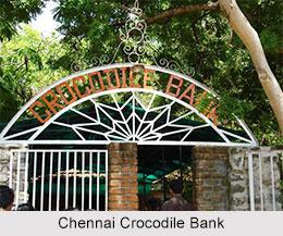 Crocodile Bank, Chennai