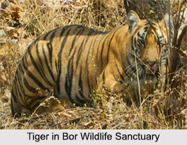 Bor Wildlife Sanctuary, Wardha district, Maharashtra