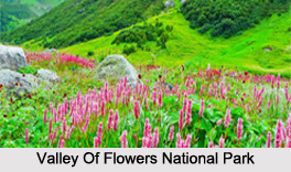 Valley Of Flowers National Park,Uttarakhand
