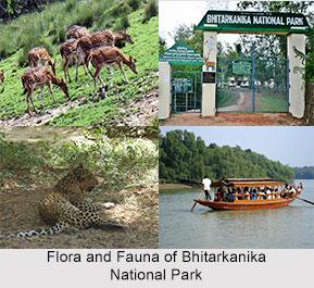 Bhitarkanika Mangrove Forest, Odisha