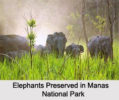 Assam Eco Parks