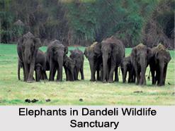 Dandeli Wild life Sanctuary, Uttara Kannada District, Karnataka