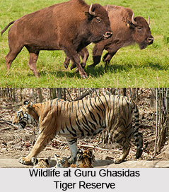 Guru Ghasidas Tiger Reserve, Koria District, Chhattisgarh
