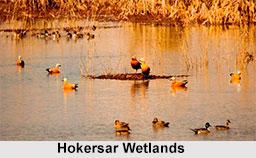 Hokersar Wetlands, Srinagar, Jammu and Kashmir