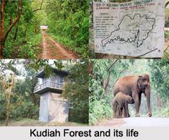 Kuldiha Forest, Balasore District, Odisha