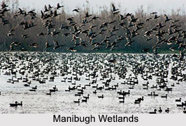 Manibugh Wetlands, Pampore Area, Jammu and Kashmir