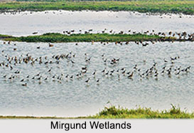 Mirgund Wetlands, Baramulla District, Jammu and Kashmir