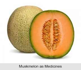 Use of Muskmelon as Medicines, Classification of Medicine