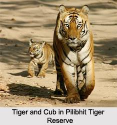 Pilibhit Tiger Reserve, Uttar Pradesh