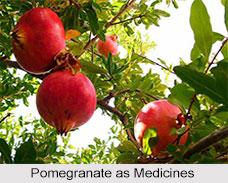 Use of Pomegranate as Medicines, Classification of Medicine