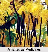 Use of Amaltas as Medicines, Classification of Medicine