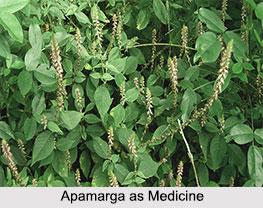 Use of Apamarga as Medicines, Classification of Medicine