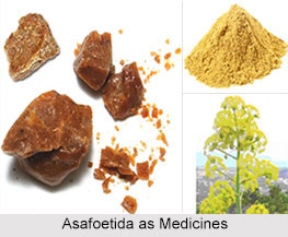 Use of Asafoetida as Medicines, Classification of Medicine
