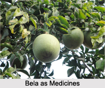 Use of Bela as Medicines, Classification of Medicine
