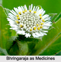 Use of Bhringaraja as Medicines, Classification of Medicine