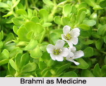 Use of Brahmi as Medicines, Classification of Medicine