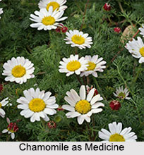 Use of Chamomile as Medicines, Classification of Medicine