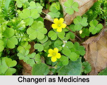 Use of Changeri as Medicines, Classification of Medicine