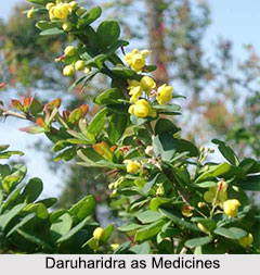Use of Daruharidra as Medicines, Classification of Medicine