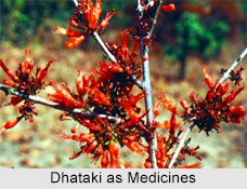 Use of Dhataki as Medicines, Classification of Medicine