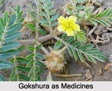 Use of Gokshura as Medicines, Classification of Medicine