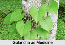 Use of Gulancha as Medicines, Classification of Medicine