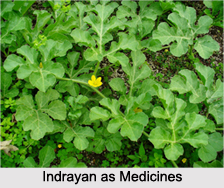 Use of Indrayan as Medicines, Classification of Medicine