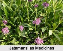 Use of Jatamansi as Medicines, Classification of Medicine