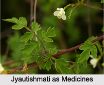 Use of Jyautishmati as Medicines, Classification of Medicine