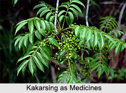 Use of Kakarsing as Medicines, Classification of Medicine