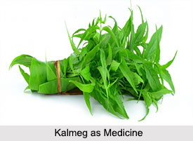 Use of Kalmeg as Medicines, Classification of Medicine