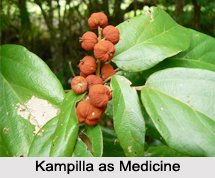 Use of Kampilla as Medicines, Classification of Medicine