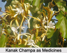 Use of Kanak Champa as Medicines, Classification of Medicine