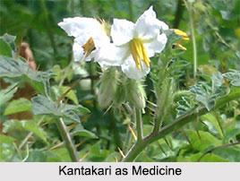 Use of Kantakari as Medicines, Classification of Medicine
