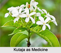 Use of Kutaja as Medicines, Classification of Medicine