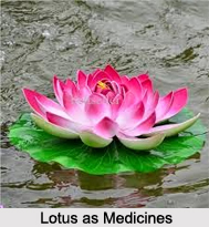 Use of Lotus as Medicines, Classification of Medicine