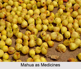Use of Mahua as Medicines, Classification of Medicine