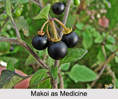 Use of Makoi as Medicines, Classification of Medicine