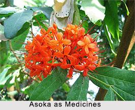 Use of Asoka as Medicines, Classification of Medicine