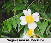 Use of Nagakesara as Medicines, Classification of Medicine