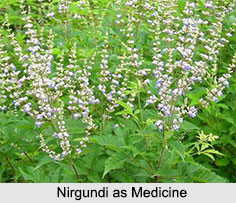 Use of Nirgundi as Medicines, Classification of Medicine