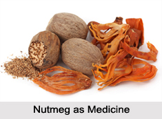 Use of Nutmeg as Medicines, Classification of Medicine