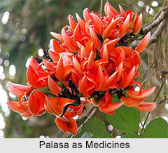 Use of Palasa as Medicines, Classification of Medicine