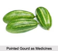 Use of Pointed Gourd as Medicines, Classification of Medicine
