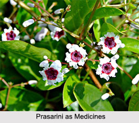 Use of Prasarini as Medicines, Classification of Medicine