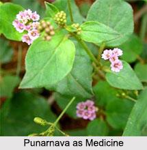 Use of Punarnava as Medicines, Classification of Medicine