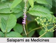 Use of Salaparni as Medicines, Classification of Medicine