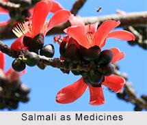 Use of Salmali as Medicines, Classification of Medicine