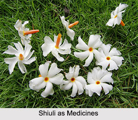 Use of Shiuli as Medicines, Classification of Medicine