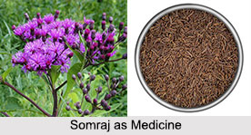 Use of Somraj as Medicines, Classification of Medicine
